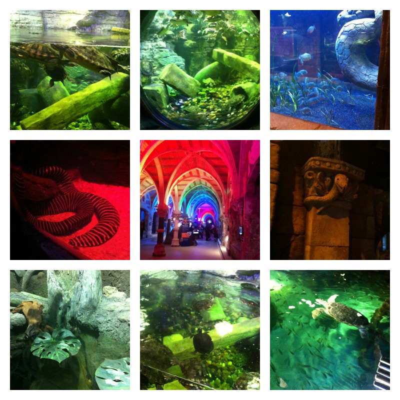 Sea life centre brighton rainforest